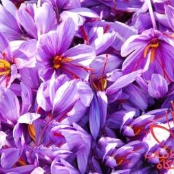 فروش گلبرگ زعفران با قیمت همکار در ایران