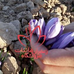 قیمت گلبرگ زعفران به صورت کیلویی