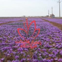 قیمت گلبرگ خشک زعفران