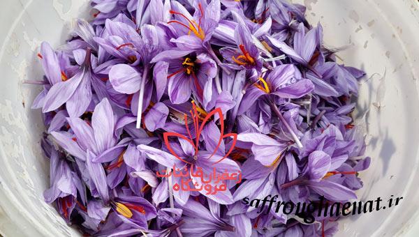 خرید زعفران کیلویی فروش عمده زعفران قائنات
