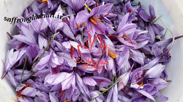 خرید زعفران کیلویی خرید عمده ی زعفران