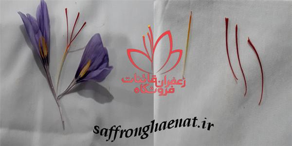 عمده فروشی زعفران در مشهد قیمت خرید عمده زعفران قائنات