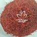 https://saffronghaenat.ir/sell-bulk-saffron-with-the-best-price/