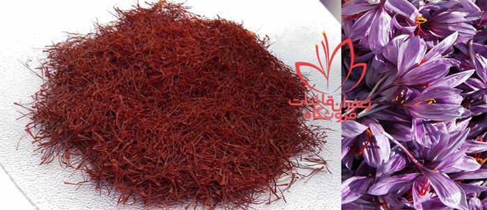مراحل تولید زعفران قیمت زعفران مشهد