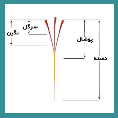 قیمت زعفران کیلویی 99 قیمت زعفران مثقالی
